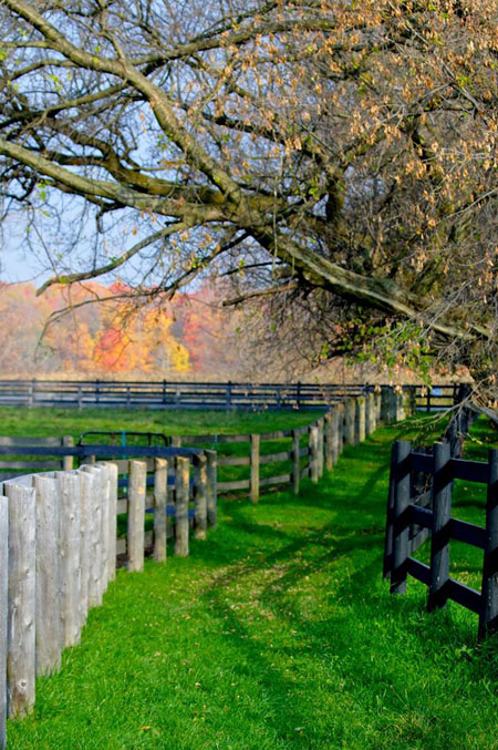 Our beautiful grounds perfect for corporate leadership training and communication skill building with horses in the Toronto Area